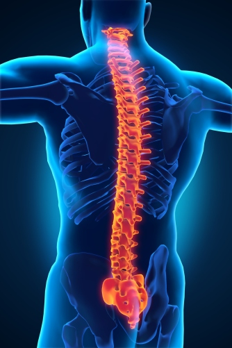 Spinal Cord Injury: Let\'s Clear the Air(ways) | I Spy Physiology Blog