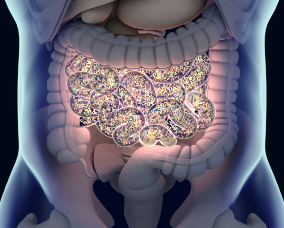 Gut bacteria , gut flora, microbiome. Bacteria inside the small intestine, concept, representation. 3D illustration.