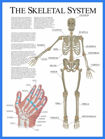 Skeletal Poster